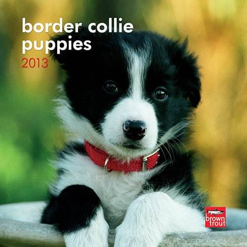 Border Collie Puppies Mini Wall Calender is awesome I have it.