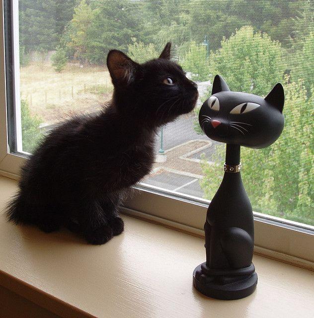 """Black cats"""