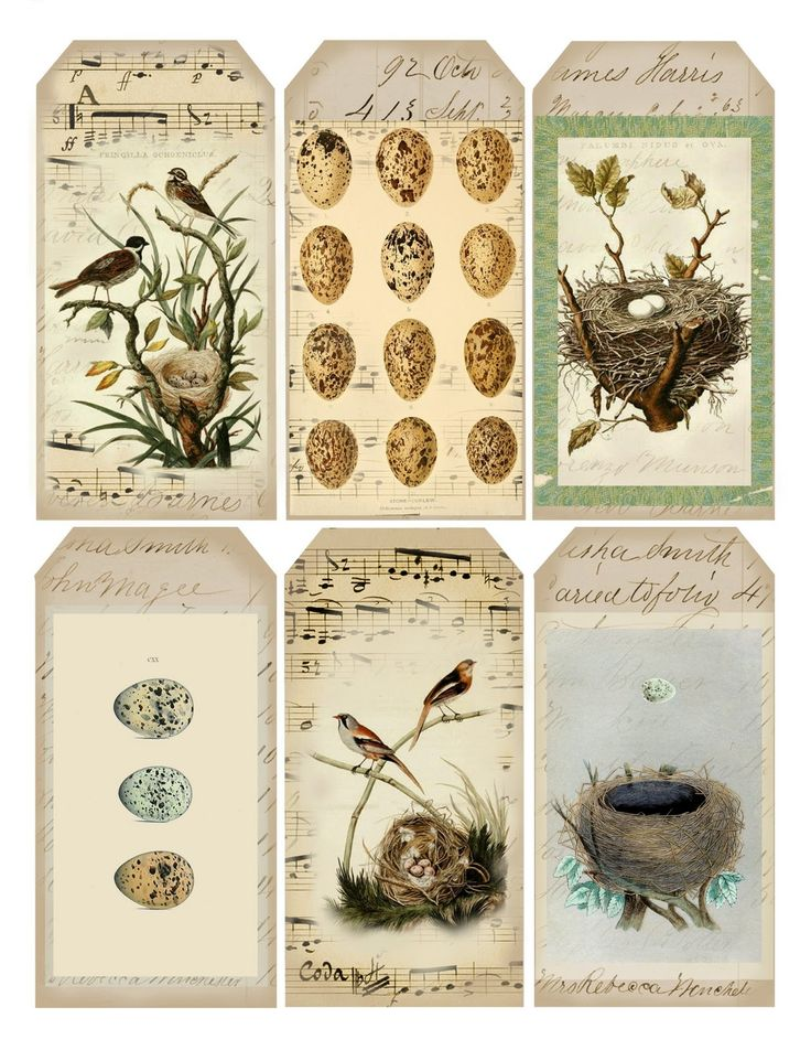 Beside them the birds of the heavens  dwell; they sing  among the branches.  ~ Psalm 104:12 ~   This collection of tags was inspired by the...printable tags
