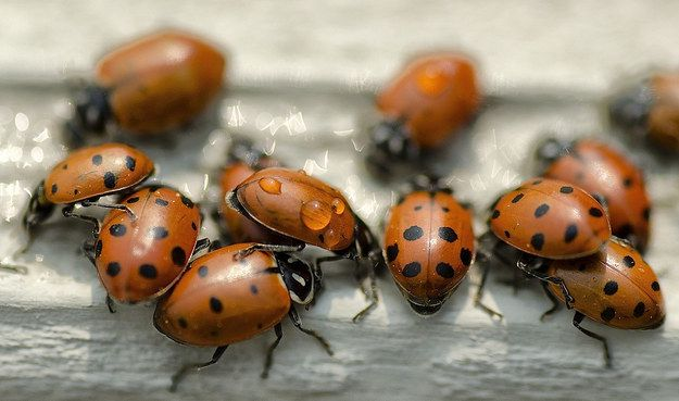 Ladybugs | 20 Words That Have A Different Meaning In The Midwest