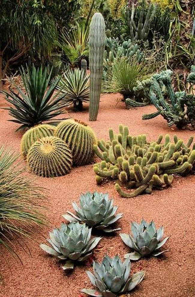 ⚜️ Jardín y jardinería... great southwest landscape design (especially rock color)