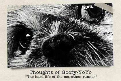 """I pensieri di Pippo-YoYo: """" Dura la vita del cane maratoneta! """""""