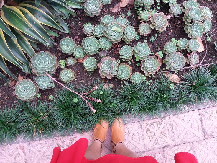 #suculentas #nature #naturaleza #botas #boots #amazing #cool #green #verde
