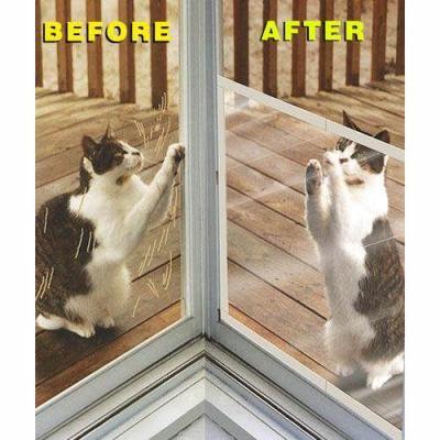 Keep Cats Off Window Screens