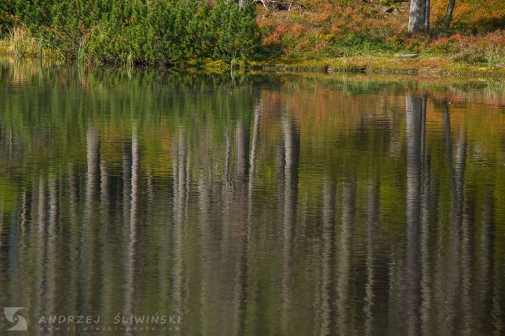 Forest mirrors in the lake.