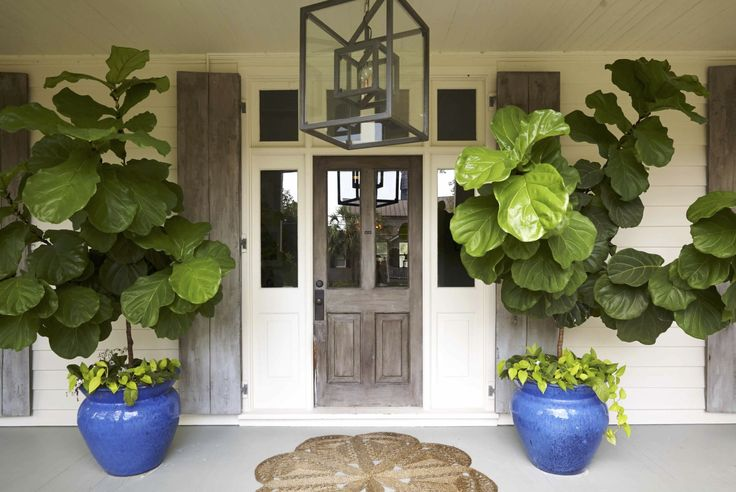 Large Fig Leaf Tropical Planters Front Porch Shade Blue