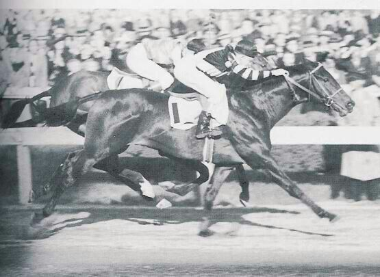 War Admiral (1934-1959) was sired by Man O'War out of Brushup; Grandsire: Fair Play; Damsire: Sweep. War Admiral had a fine racing record, winning 21 out of 26 starts (21-3-1). In 1937 War Admiral was the U.S. Champion 3-Year-Old Colt, Horse of the Year and the fourth Triple Crown winner. He was the leading sire in North America in 1945 and the leading broodmare sire in North America in both 1962 and 1964. War Admiral was inducted into the Hall of Fame in 1958.