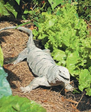 How to keep birds away from my garden? - Agriculture