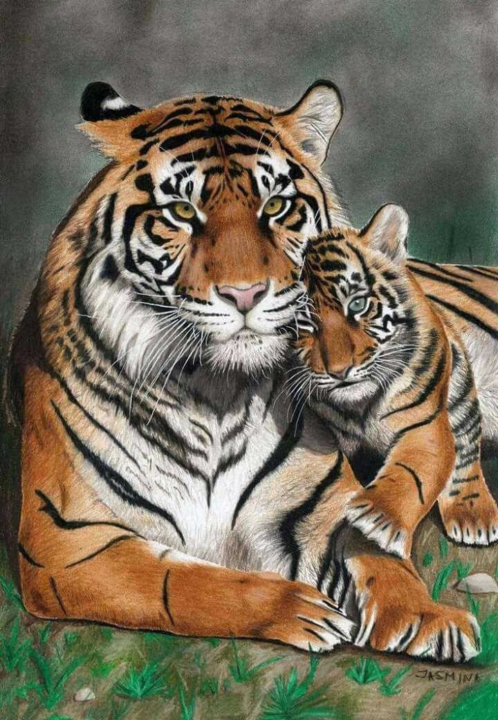 знаете картинки тигров и тигрят карандашом отличие тиснения