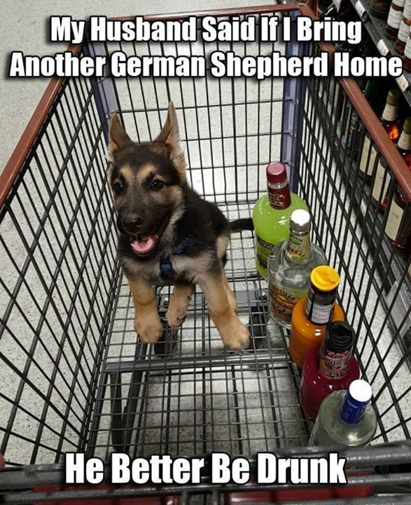 See more HERE: https://www.sunfrog.com/Pets/LOVE-German-Shepherd-Dog-Black-Guys.html?53507  That can be arranged.