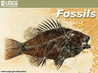 Fossil Facts- Dialogue for Kids (Idaho Public Television)