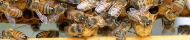 Pleased Bees | Treatment-free beekeeping; poison-free bee removals