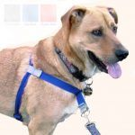 Walk Your Dog With Love Harness Review – Comes in 7 different sizes
