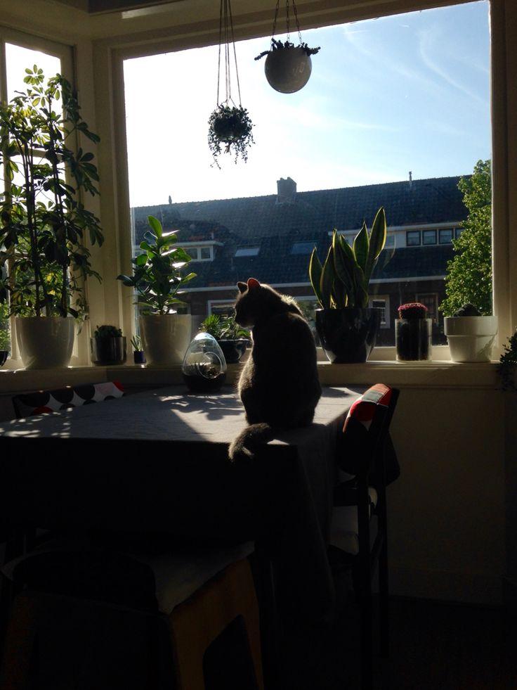 #Haarlem #myhome #sunshine