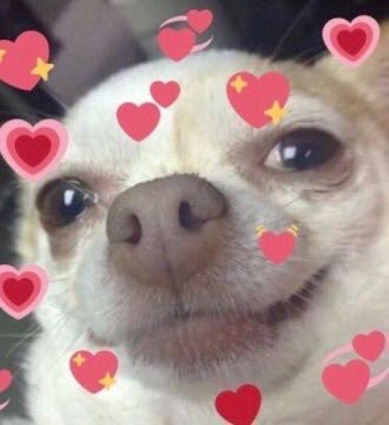 Pin De Lianne Lopez En Aromatherapy Memes Lindos Memes De Animales Tiernos Memes Amor