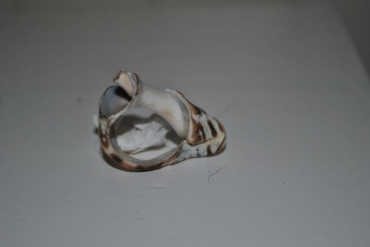 Ring made of sea Shell , found it like this on the beach when on hollyday in Crete.
