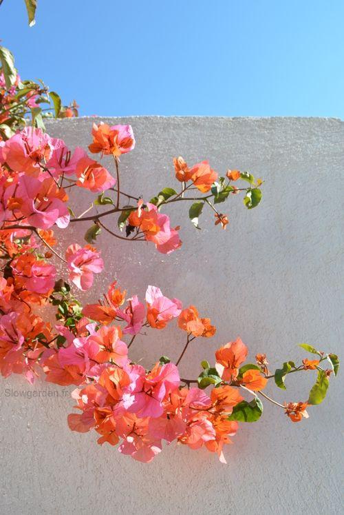 Couleurs de printemps, frecheur des plantes, nature, souvenir des vacances
