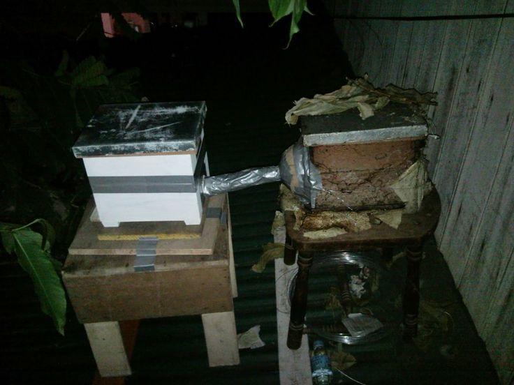 A Not So Secret Garden: Natural Hive Duplication Started...