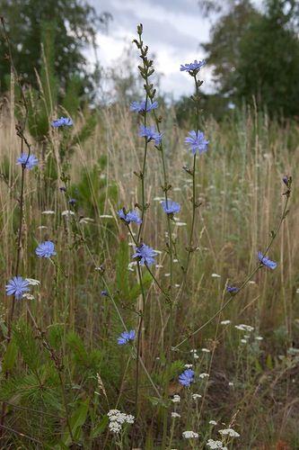 Лечебные травы » Волшебный мир Алиши