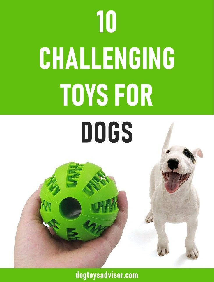 Do You Want To Keep Your Dog Busy And Entertained While He S Home