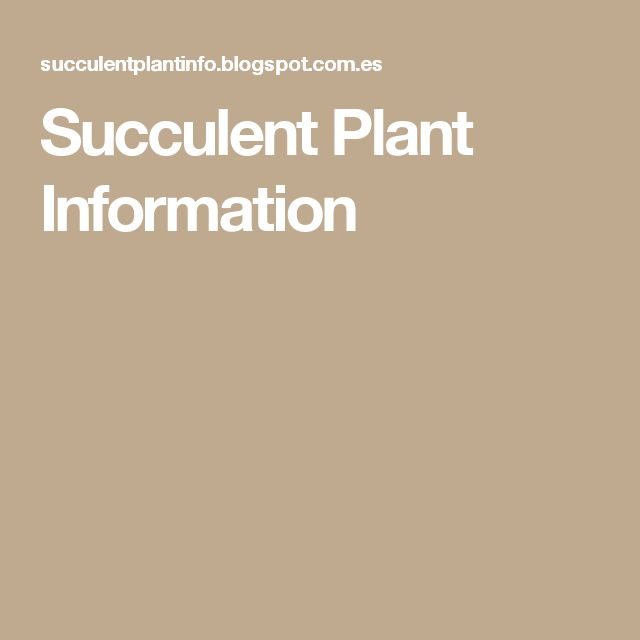Succulent Plant Information