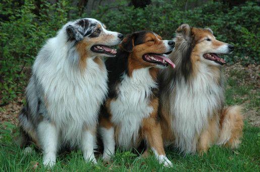 Karmy dla psów ras dużych
