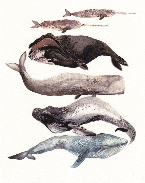 .Inspiration, Illustration, Art, Michelle Morin, Whales Stacked, Michele Morin, Archives Prints, Blue Whales, Animal