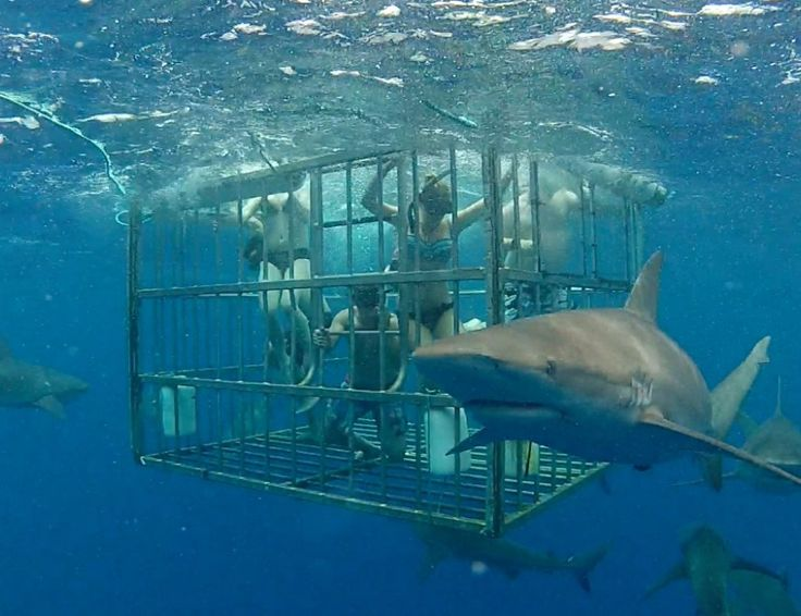 Watch Brooke step into the home of the Sharks as she cage dives in North Hawaii.