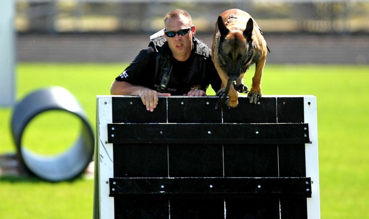 Officer Mark Sohn of the Boynton Beach Police Department helps his Belgian Malinois, Hutch, compete in the obstacle course at the inaugural South Florida Police K-9 Competition at Boynton Beach High School.