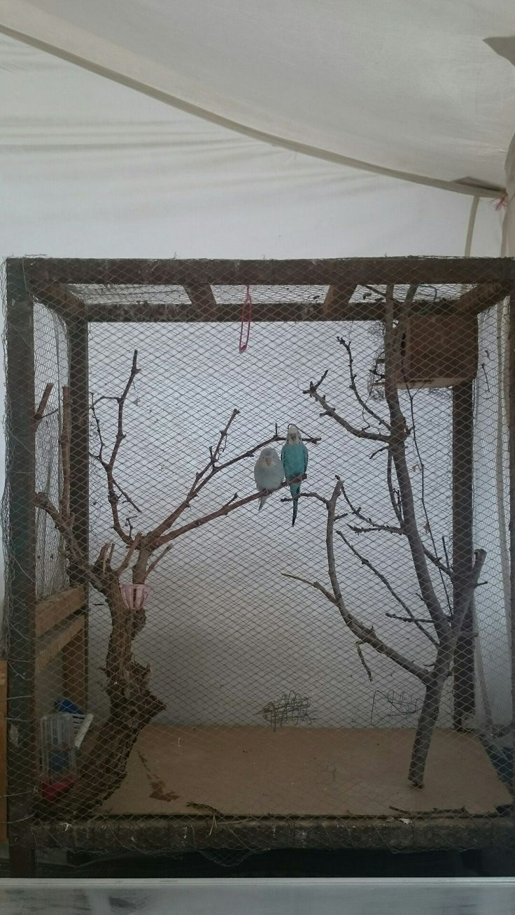 Budgies cage