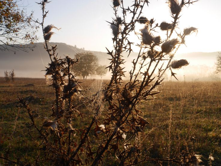 Beautiful nature shot from Romania - from the filming of Wild Boar Fever 5
