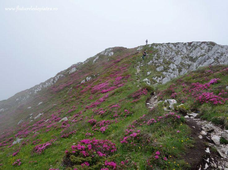 traseul creasta nordica piatra craiului vara  - rohdo