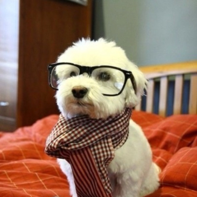 Smart puppy: Animals, Dogs, Stuff, Hipster Puppy, Pet, Funny, Things, Hipsterdog