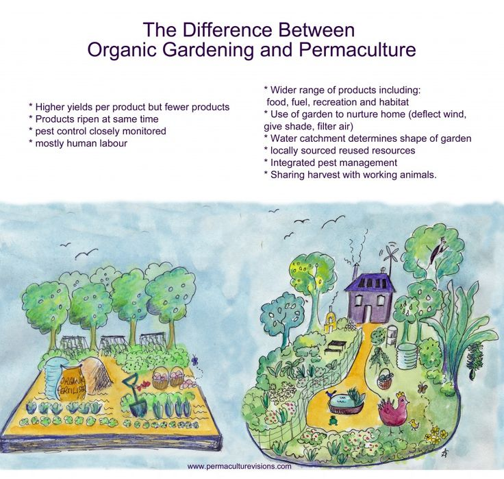 The difference between organic gardening and Permaculture.
