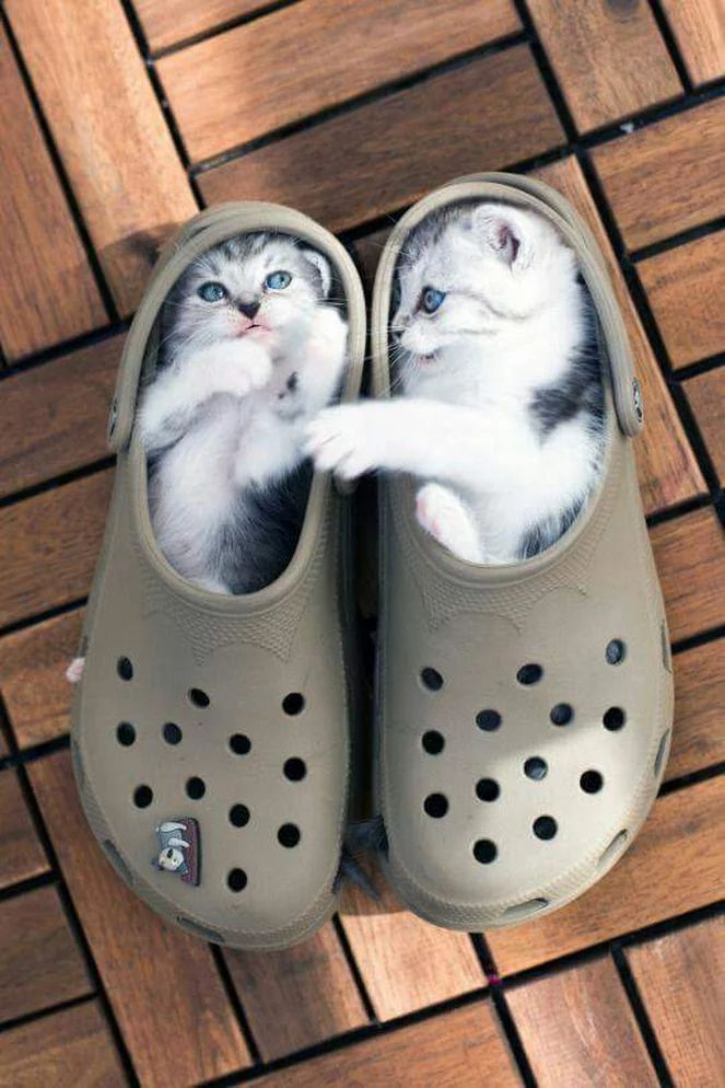 I hate Crocs... But these kitties make them better. and like OMG! get some yourself some pawtastic adorable cat apparel!