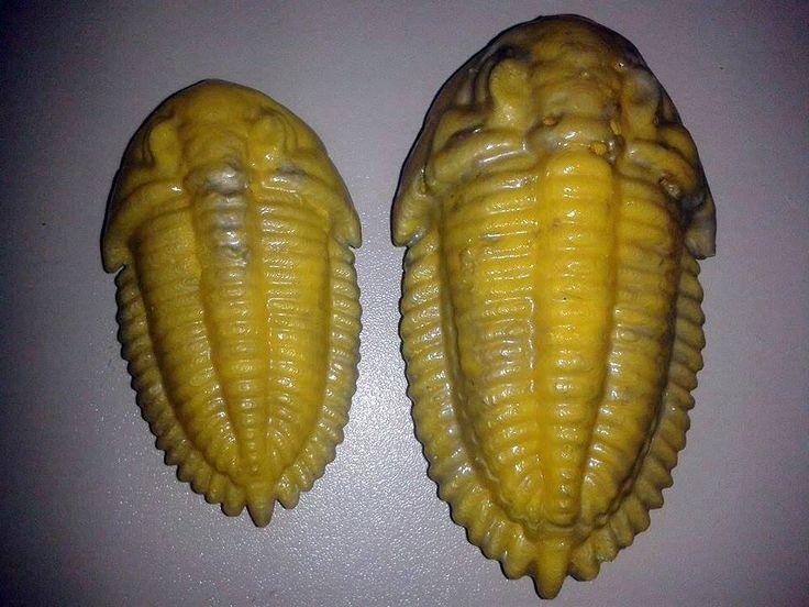 Model trilobita / Trilobite Model