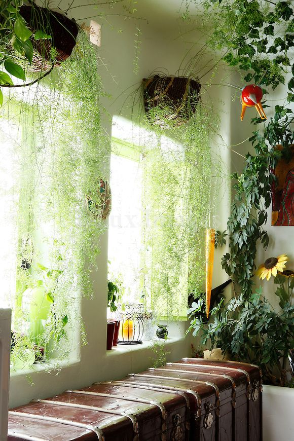 Hanging plant curtains gardening indoor window - How to hang plants in front of windows ...