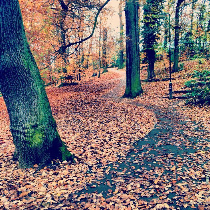 Endcliffe Park in Autumn, Sheffield