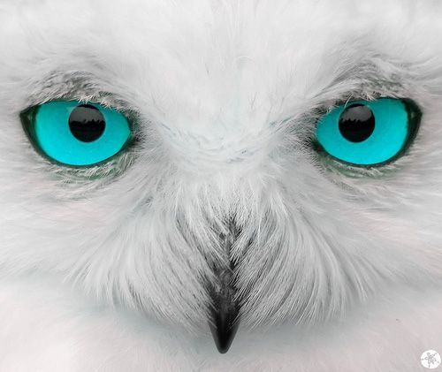 Stunning teal eyes on white