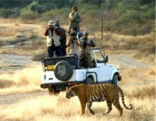tourist enjoying Tiger view in corbet park india