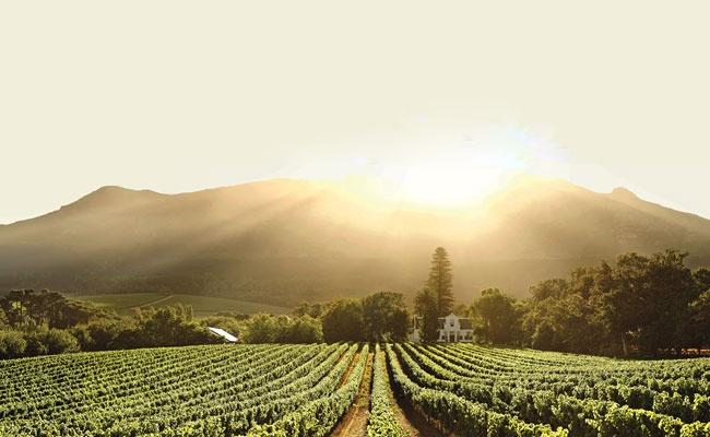 Cape Winelands ~  Stellenbosch, South Africa