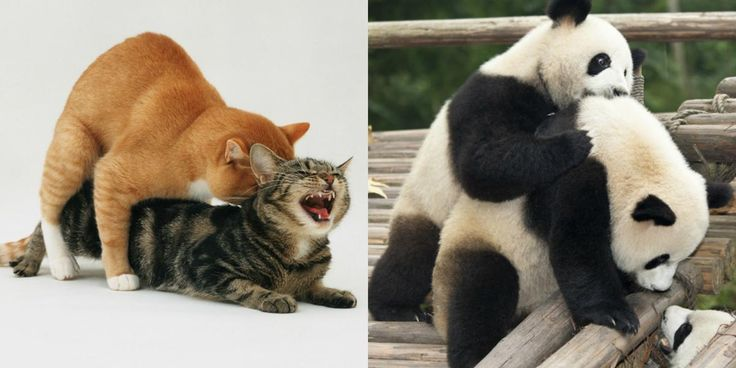 Do you know what animal has three vaginas, sex until it disintegrates, or a prehensile penis? Find out these answers and more when our animal friends go wild.