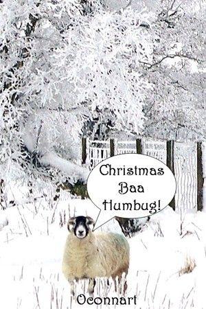 Funny scrooge Christmas baa humbug sheep,