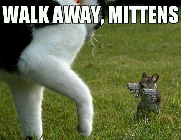 Image result for mouse fight back funny
