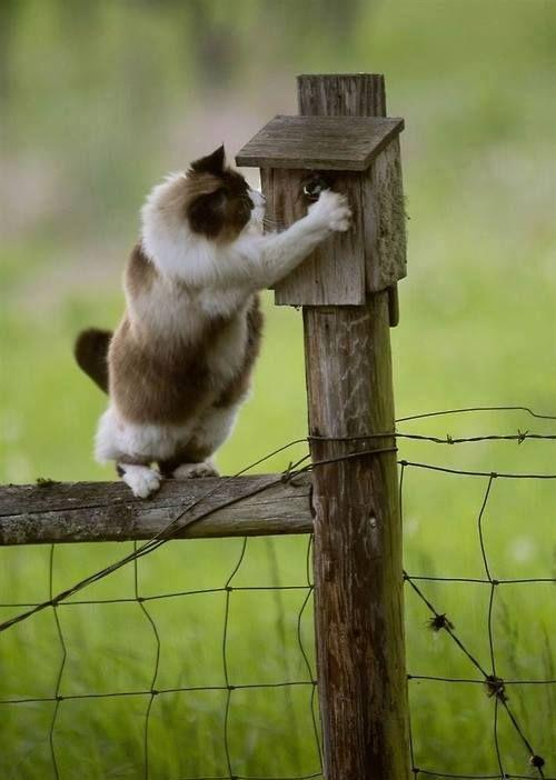 Fat cat vs bird house