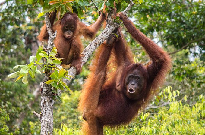 Help save orangutans on a trip you'll never forget