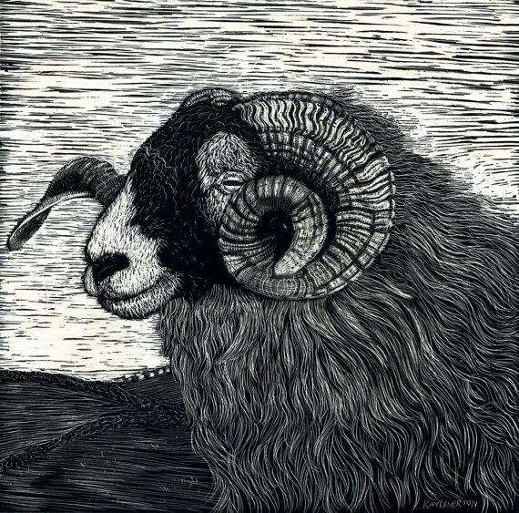 A fine Ram from a photo at a show and used for the Aries Astrology symbol. I love sheep and sit on the hillsides to listen to them bleating,