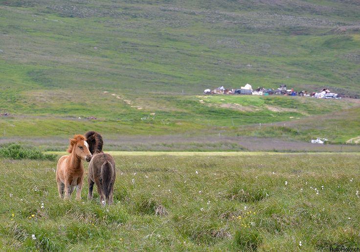 Island entdecken