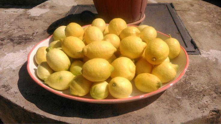 Limoni siciliani, belli, colorati e profumati come la Sicilia.