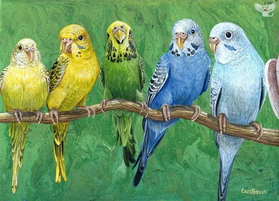 "Original ACRYLIC marbled Budgie painting ""Budgie Band"" in custom frame"